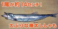 シシャモ子持ち樺太シシャモ3L【360gししゃも/24尾シシャモ】
