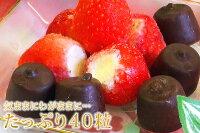 アイスクリーム業務用送料無料春摘み苺&プチチョコのアイスバラエティ40個