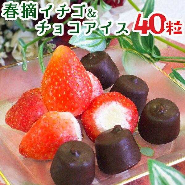 残暑見舞い アイス スイーツ アイスクリーム 送料無料 苺アイス 春摘み苺アイス&プチチョコアイス ギフト(40粒)