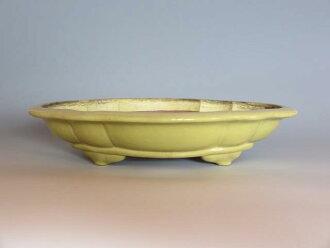 Bonsai ◆ Golden glazed Quince formula ◆ sembikiya China bowls