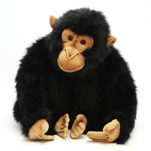 HANSA CHIMPANZEE (ハンサ チンパンジー)