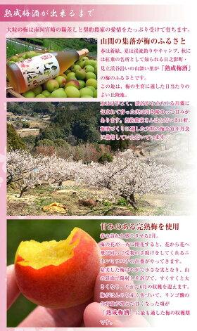 【限定品】高千穂梅酒14度720ml