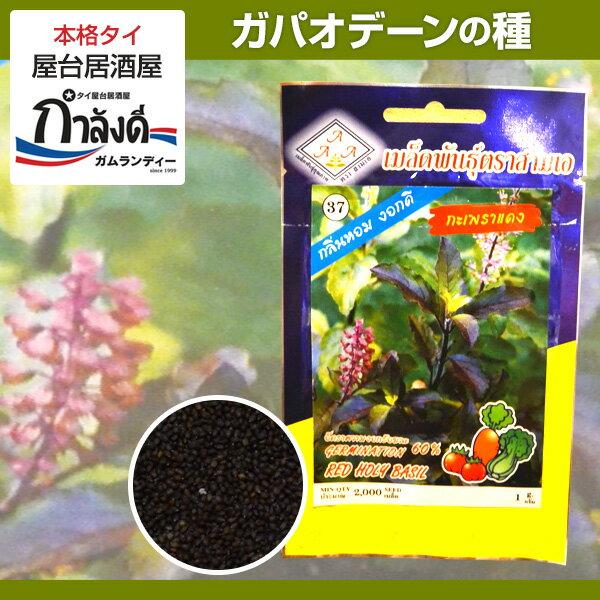 希少種!【送料無料】バイカパオ・デーン(赤ガパオ・赤ホーリーバジル)の種