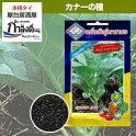 メール便ご利用で送料無料!!カナー(カイランサイ)種タイ野菜種