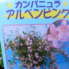 カンパニュラ アルペンピンク苗♪枝垂れ咲く星型の花が魅力 スタンド鉢 ハンギング 寄せ植えに人気 多年草 花苗 花 フラワー 販売 通販 種類