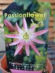 トケイソウキューガーデンズ花苗ワンランク上のグリーンカーテンにさまざまな花を楽しめる時計草販売通販種類