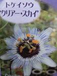 トケイソウクリアースカイ花苗ワンランク上のグリーンカーテンにさまざまな花を楽しめる時計草販売通販種類