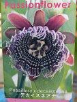 トケイソウデカイスネアナ花苗ワンランク上のグリーンカーテンにさまざまな花を楽しめる時計草販売通販種類