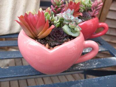 多肉植物ハートカップ寄せ陶器鉢多肉女子タニクショクブツ観葉植物鉢は8×13×10cmバレンタインプレゼントヴァレンタイン