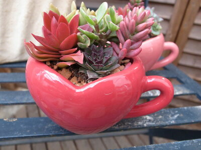 多肉植物ハートカップ寄せ陶器鉢多肉女子タニクショクブツ観葉植物鉢は8×13×10cm【ラッキーシール対応】