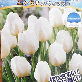 チューリップ球根 富山の清流チューリップA エンゼルスウィッシュ5球【チューリップ】【球根】【Tulip】販売 通販 種類【ちゅーりっぷ】