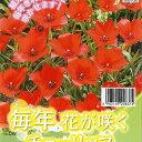 チューリップ リニフォリア7球セット 植えっぱなしで毎年花が咲く ちゅーりっぷ 球根【ラッキーシール対応】