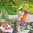 観葉植物 福袋 季節のお花またはミニ観葉植物5株セット 福袋!送料無料で他との同一梱包可 誕生日プレゼント観葉植物 寄せ植えに観葉植…