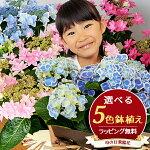 5色から選べる!紫陽花