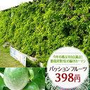 【ポイント10倍】パッションフルーツ苗 緑のカーテン グリーンカーテン 時計草 夏の節電対策に トケイソウ 日よけ