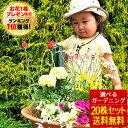 花苗 選べる花ガーデニング 季節の花苗セット クリスマスローズ 福袋 お歳暮ギフト 福袋 花壇 花 送料無料 花 お母さ…