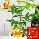 ニーム ミラクルニーム 4株セット 鉢植え 虫除け ニームの木 ミラクルハーブ 蚊除け 蚊よけ植物 防虫 害虫 有機栽培に…
