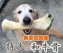 無添加国産 和牛骨 特大 和牛の骨 1本 BIGサイズ 犬のおやつ げんこつ付き ボーン5000円(税抜)以上送料無料!/【RCP】