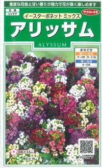 花の種オール1割引き!アリッサムイースターボネットミックス小袋サカタのタネ
