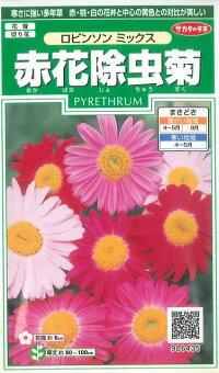 花の種オール1割引き!赤花除虫菊ロビンソンミックス小袋サカタのタネ