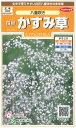花の種 オール1割引き!宿根 かすみ草八重咲き 小袋サカタのタネ
