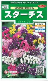 花の種 スターチス 切り花用 美色混合 小袋 サカタのタネ