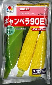 とうもろこしキャンベラ90EX 2000粒 タキイ種苗
