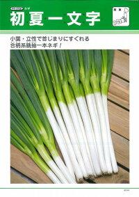 野菜種ねぎ初夏一文字2Lコート5000粒タキイ種苗