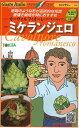 野菜種 イタリア野菜ミケランジェロ50粒 トキタ種苗