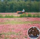 マメ科作物レンゲ 1kg雪印種苗