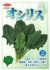 野菜種ほうれんそうオシリス3万粒