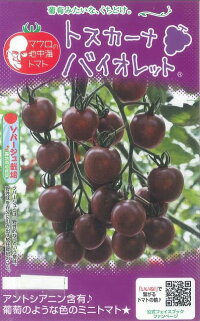 野菜種マウロの地中海トマトトスカーナバイオレット8粒
