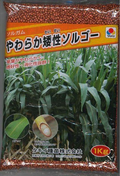 緑肥やわらか矮性ソルゴー1kg タキイ種苗