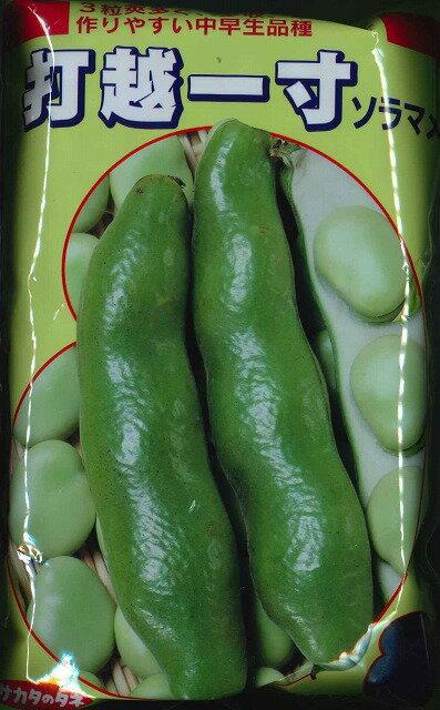 野菜種 そら豆打越一寸  1Lサカタのタネ