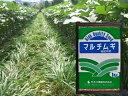 緑肥 マルチムギ 1kgカネコ種苗株式会社