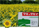 緑肥 ひまわりキッズスマイルプラス 500gタキイ種苗