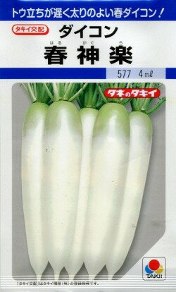大根春神楽 4mlタキイ育成