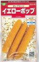 野菜種とうもろこしポップコーン イエローポップ小袋 実咲サカタのタネ