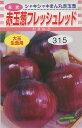 たまねぎ赤玉葱 フレッシュレッド 4ml松永種苗
