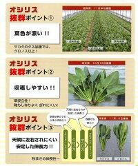 野菜種ホウレンソウオシリス3万粒