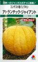 かぼちゃアトランチック・ジャイアント6粒タキイ種苗