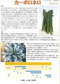 野菜種イタリア野菜カーボロネロトキタ種苗
