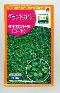 景観形成作物 グランドカバー ダイカンドラ(コート)20ml タキイ種苗