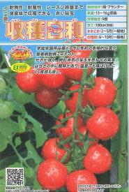 ミニトマト収穫日和 10粒トキタ種苗