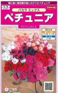 花の種オール1割引き!ペチュニアバカラミックス小袋サカタのタネ