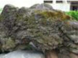 熊本阿蘇溶岩石[大き目30センチ以上]【1kgグラム600円】(20キロまで送料1000円・23キロ以上お買い上げの場合は送料無料) ペット/水槽/水草/花壇/漁礁/造園/オリジナルガーデン/レイアウト溶