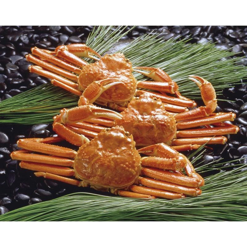 【送料無料】 ボイルずわいがに姿 ZHB453【ボイル済み カニ味噌 海産物 海の幸 ずわい蟹 お取り寄せ グルメ おいしい 美味しい うまい 産地直送】