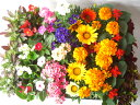 [生産直売]夏の花壇苗40個おまかせ詰め合わせ【GB★0603_送料無料】【SBZcou1208】