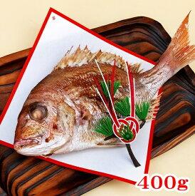 お食い初め 鯛 400g 山形県産 天然 真鯛焼き 敷き紙 飾り 冷蔵 節句 100日祝い 祝い鯛 焼鯛 焼き鯛 塩焼き 真鯛 鮮魚 お祝い 海鮮