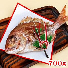 お食い初め 鯛 700g 山形県産 天然 真鯛焼き 敷き紙 飾り 送料無料 冷蔵 節句 100日祝い 祝い鯛 焼鯛 焼き鯛 塩焼き 真鯛 鮮魚 お祝い 海鮮 令和